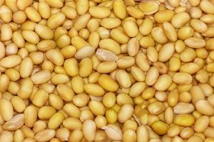 Uso do gás ozônio na conservação de grãos e sementes