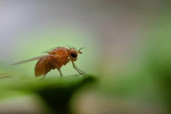 Tecnologia ajuda a identificar e controlar insetos-praga devastadores