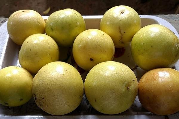 Pesquisador desenvolveu técnica simples e de fácil aplicação que dobrou o tempo de conservação em frutas