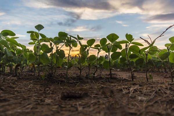 Pesquisadores da UFPB criam hidrogel natural para melhorar desempenho agrícola