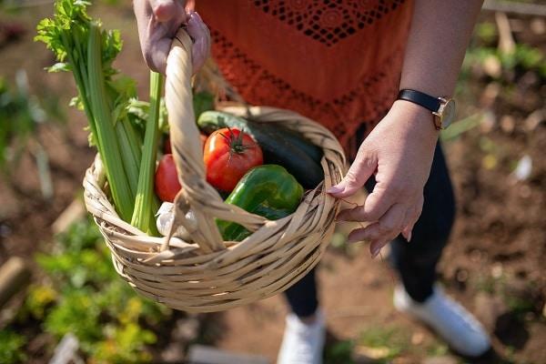 Projeto internacional inovador: o futuro dos sistemas alimentares em áreas urbanas