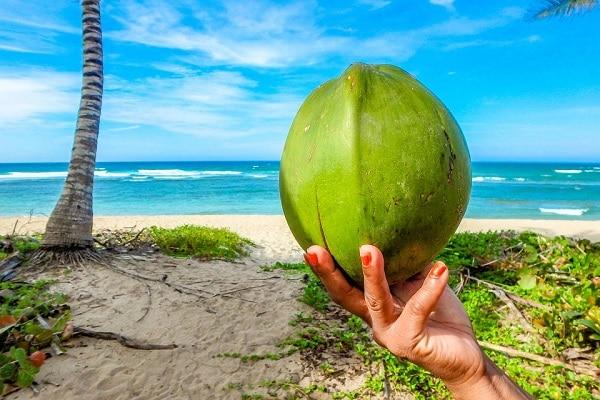 Pesquisa utiliza plasma frio, processamento não térmico, para aumentar tempo de conservação da água de coco